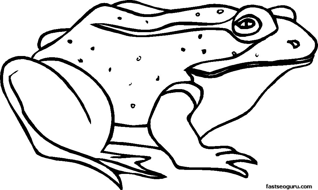 Frog for kids coloring pages for free frog for kids coloring pages