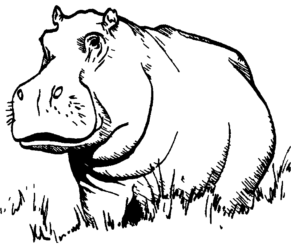 Line Art Hippo : Images of a hippo az coloring pages