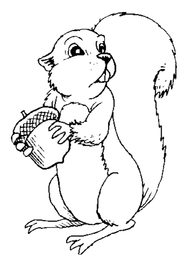 Picture Of Squirrels - Coloring Home