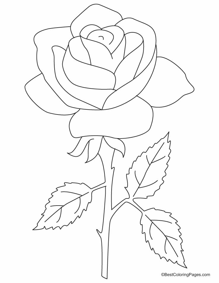 A Beautiful Rose With Three Petals Coloring Pages | Download Free