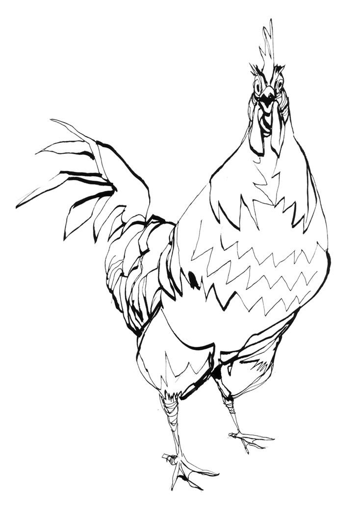 Free Rooster Pictures Coloring