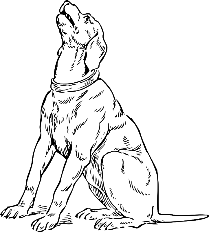 bassett coloring pages - photo#19