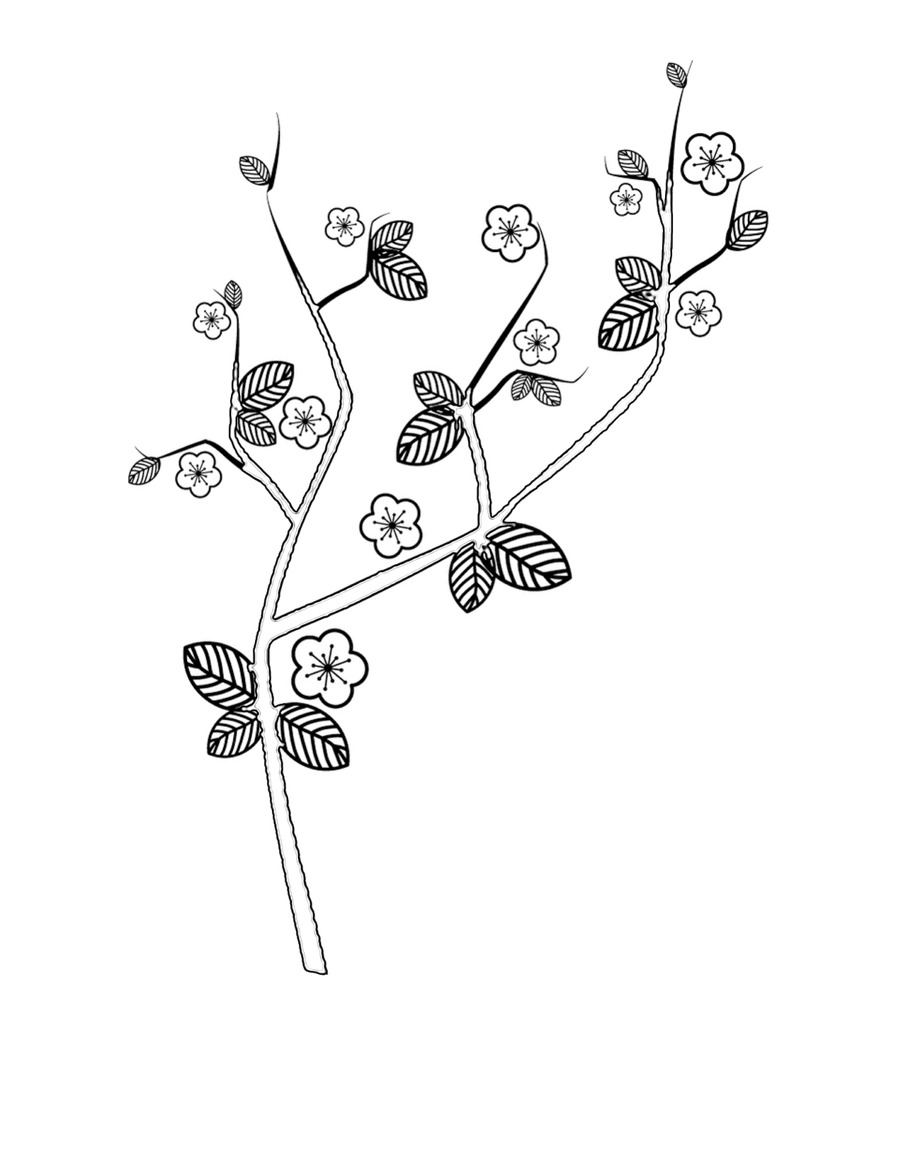 coloring pages cherry trees coloring pages cherry blossom branch