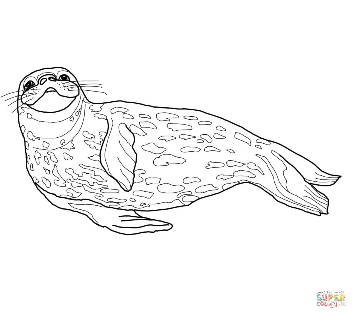 Weddell Seal coloring page | Free Printable Coloring Pages