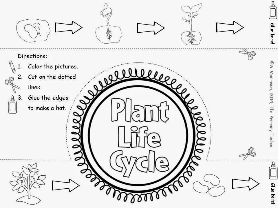 Plant Life Cycle Coloring Pages - Coloring Home