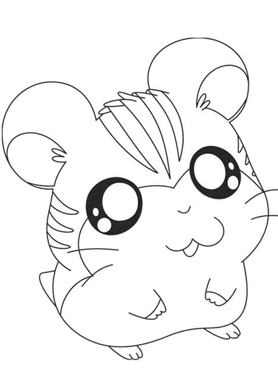 Cute Hamster Coloring Pages Coloring