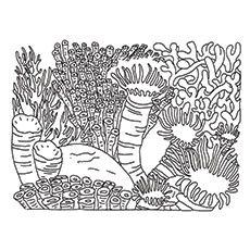 Coral Reef - Coloring Pages For Kids And For Adults - Coloring Home