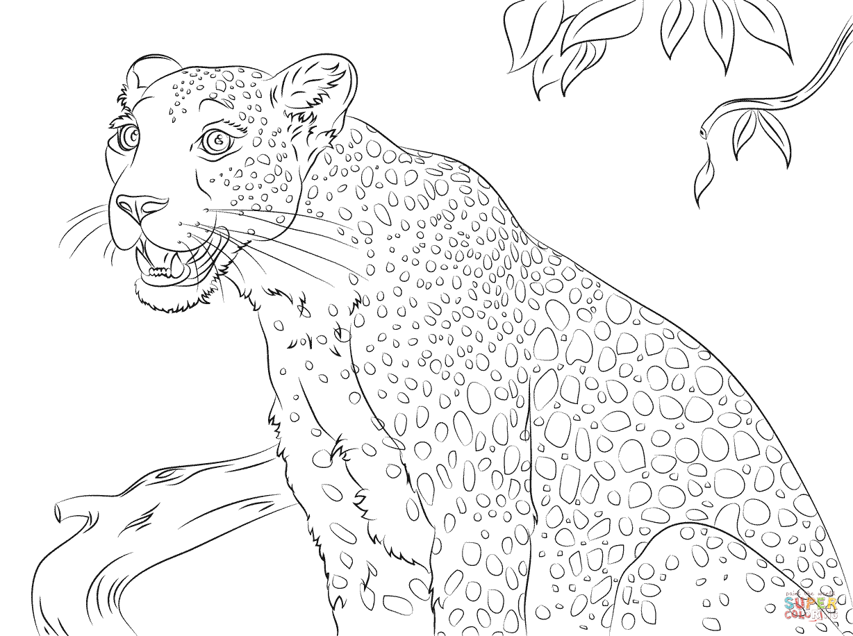 Free coloring pages leopard - Cute Leopard Coloring Page Free Printable Coloring Pages