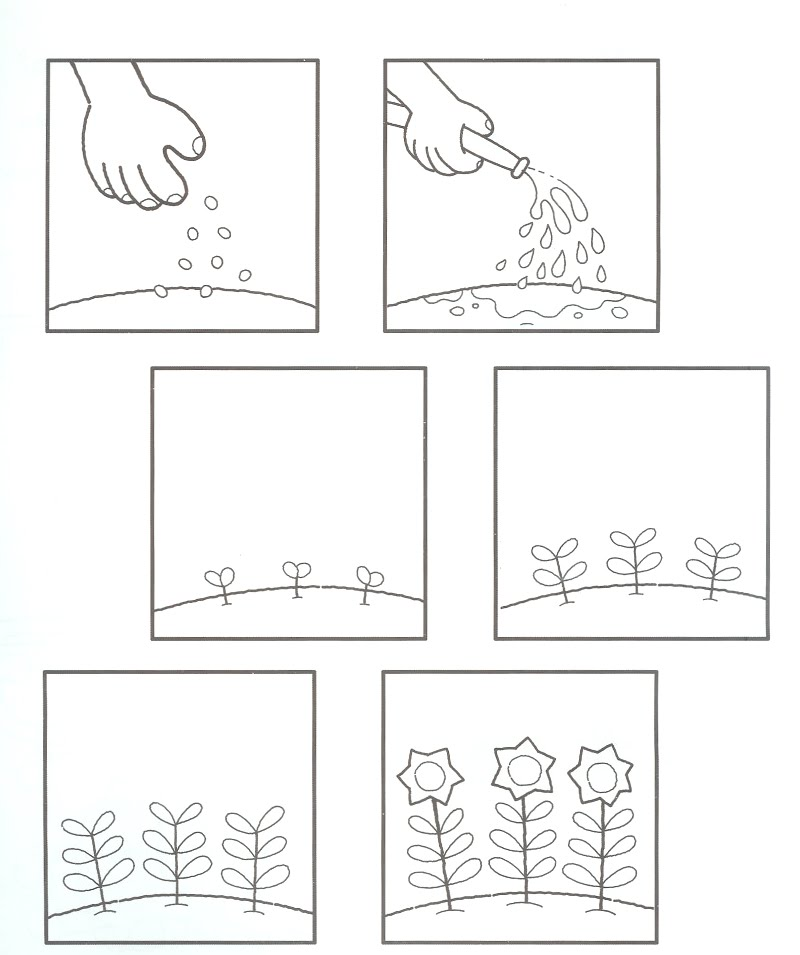 Life Cycle Of A Plant Coloring Page - Coloring Home