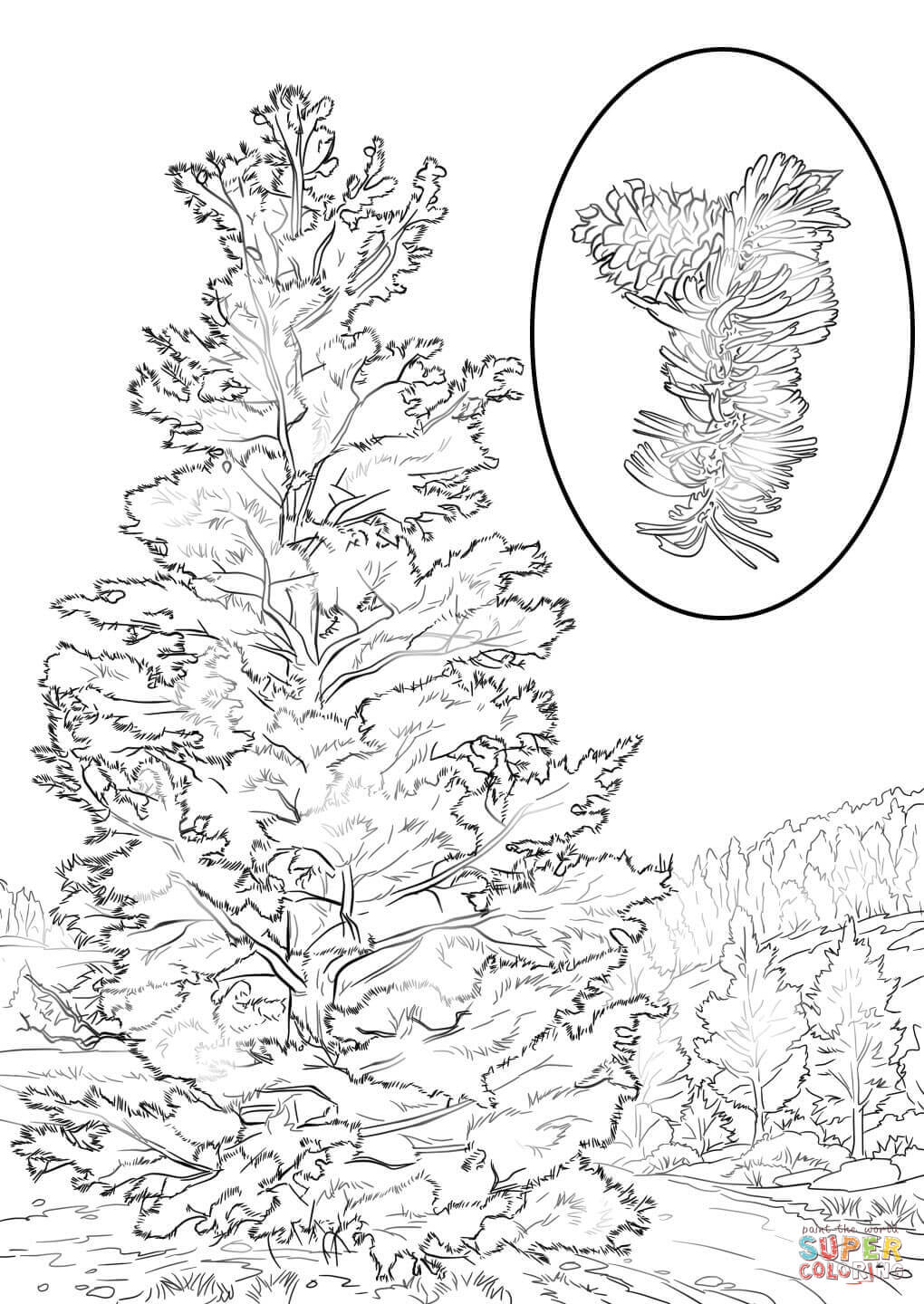 kids under pine trees coloring pages | Pine Tree Coloring Page - Coloring Home