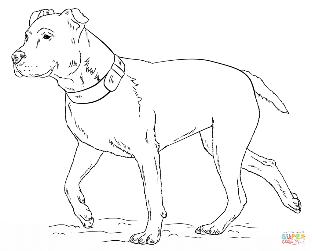 Coloring Pages Pit Bull Coloring Pages pitbull coloring page az pages pit bull high quality pages