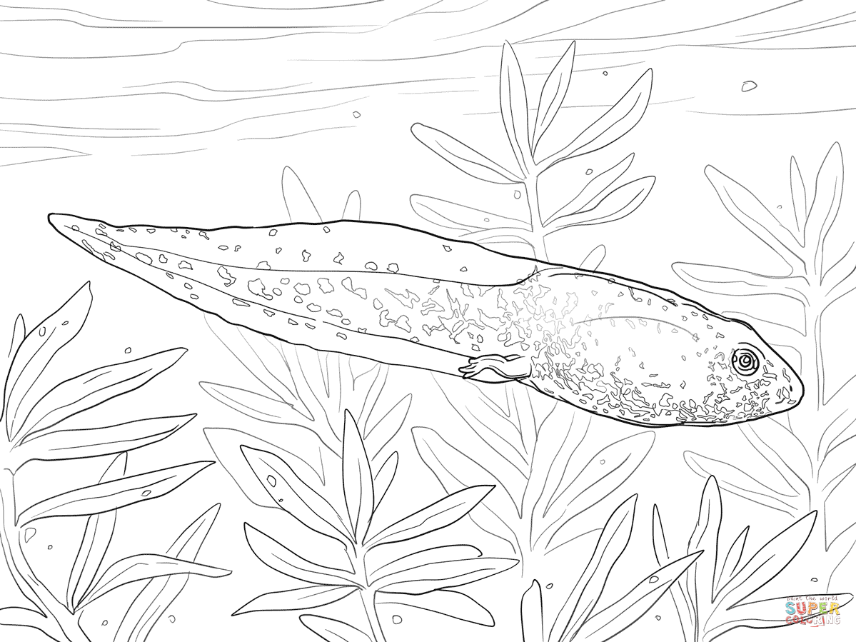 Tadpole Coloring Page Coloring Home