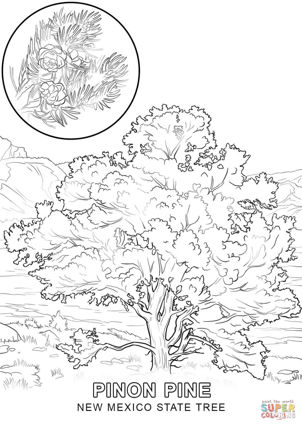 printable tree coloring pages - new mexico tree coloring page coloring home