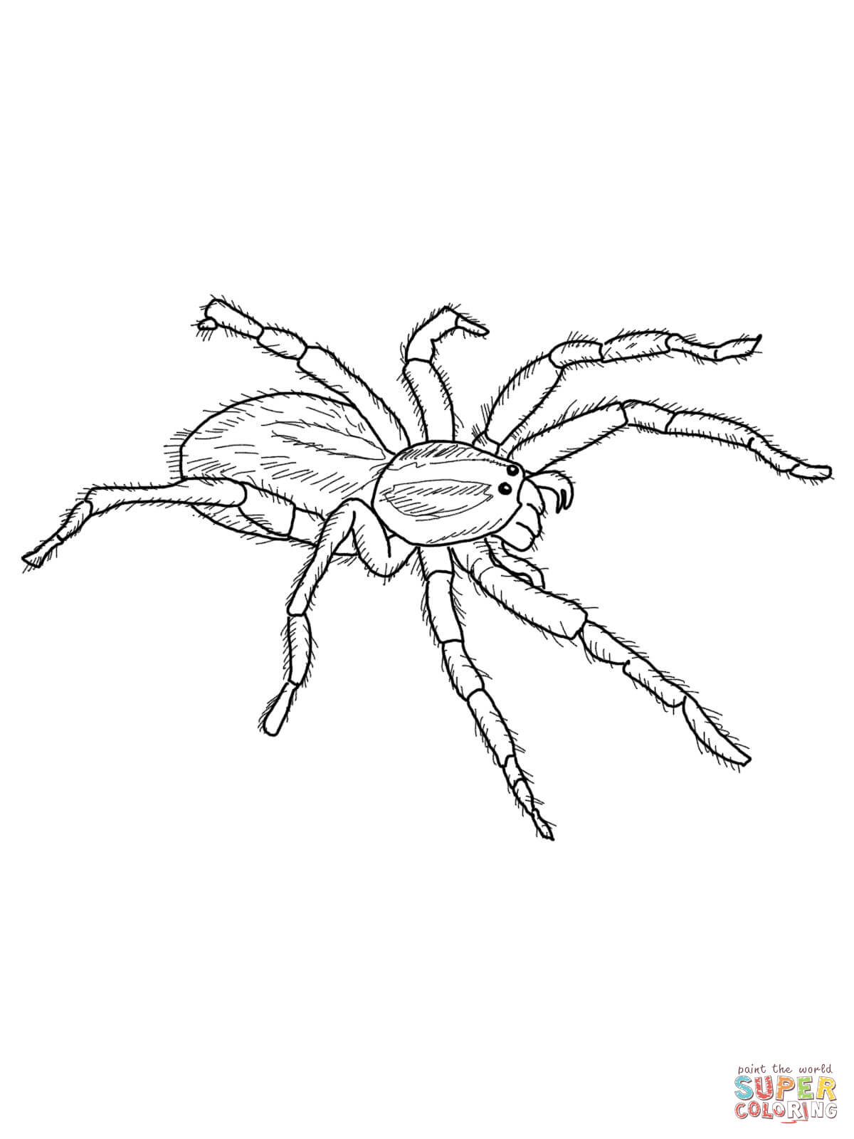 Spider Coloring Pages Printable - Coloring Home