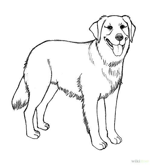 Dogs | Coloring pages, German ...