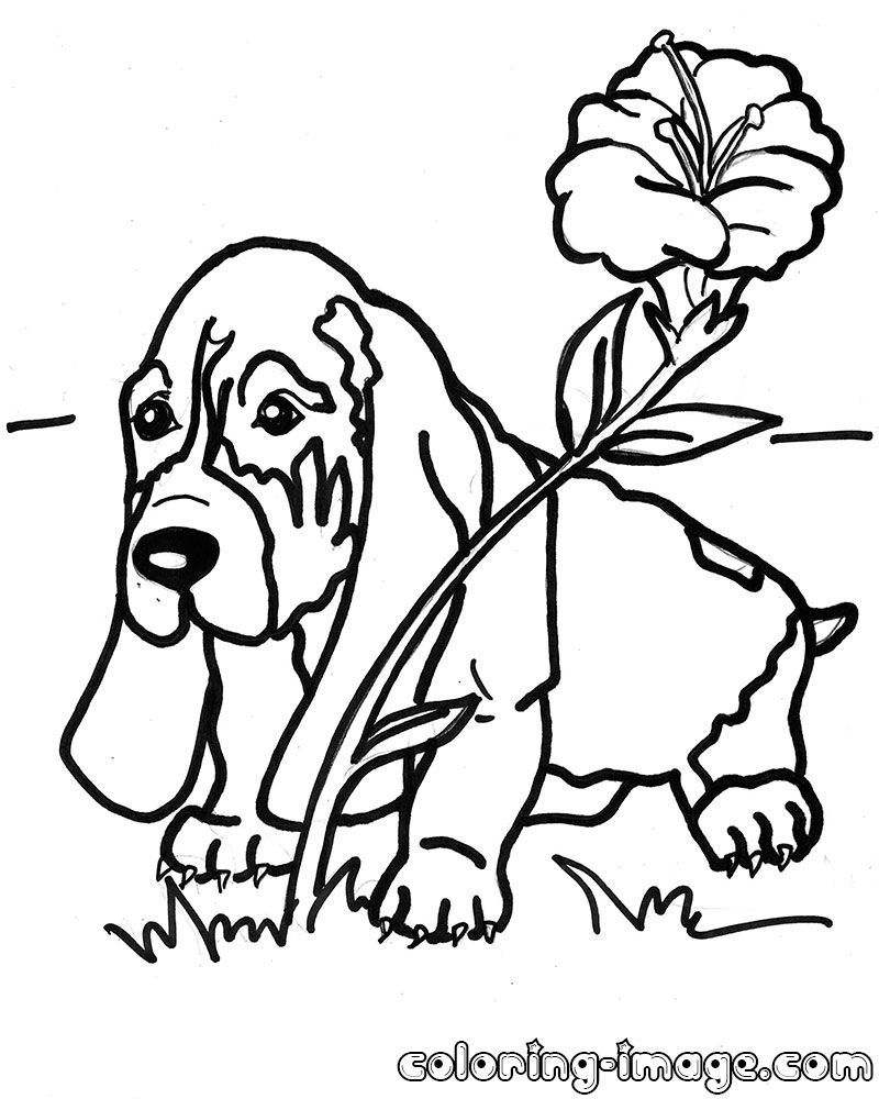 dog basset coloring pages - photo#15