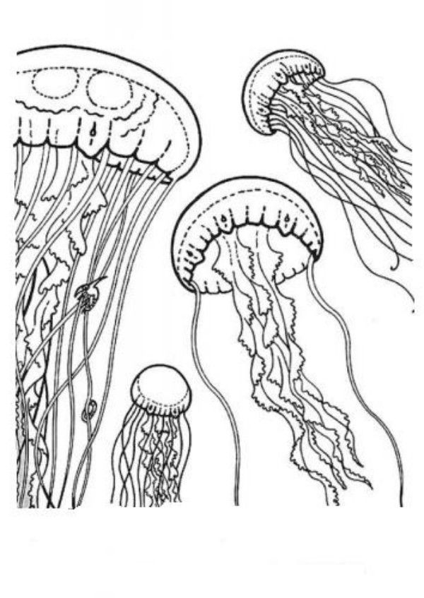 coloring pages jellyfish - photo #31