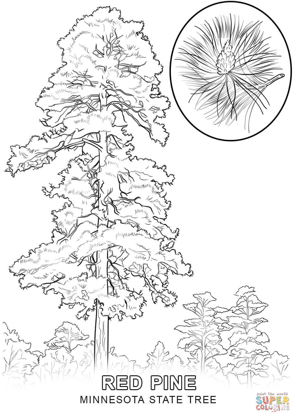 Louisiana State Tree Coloring Page - Coloring Home