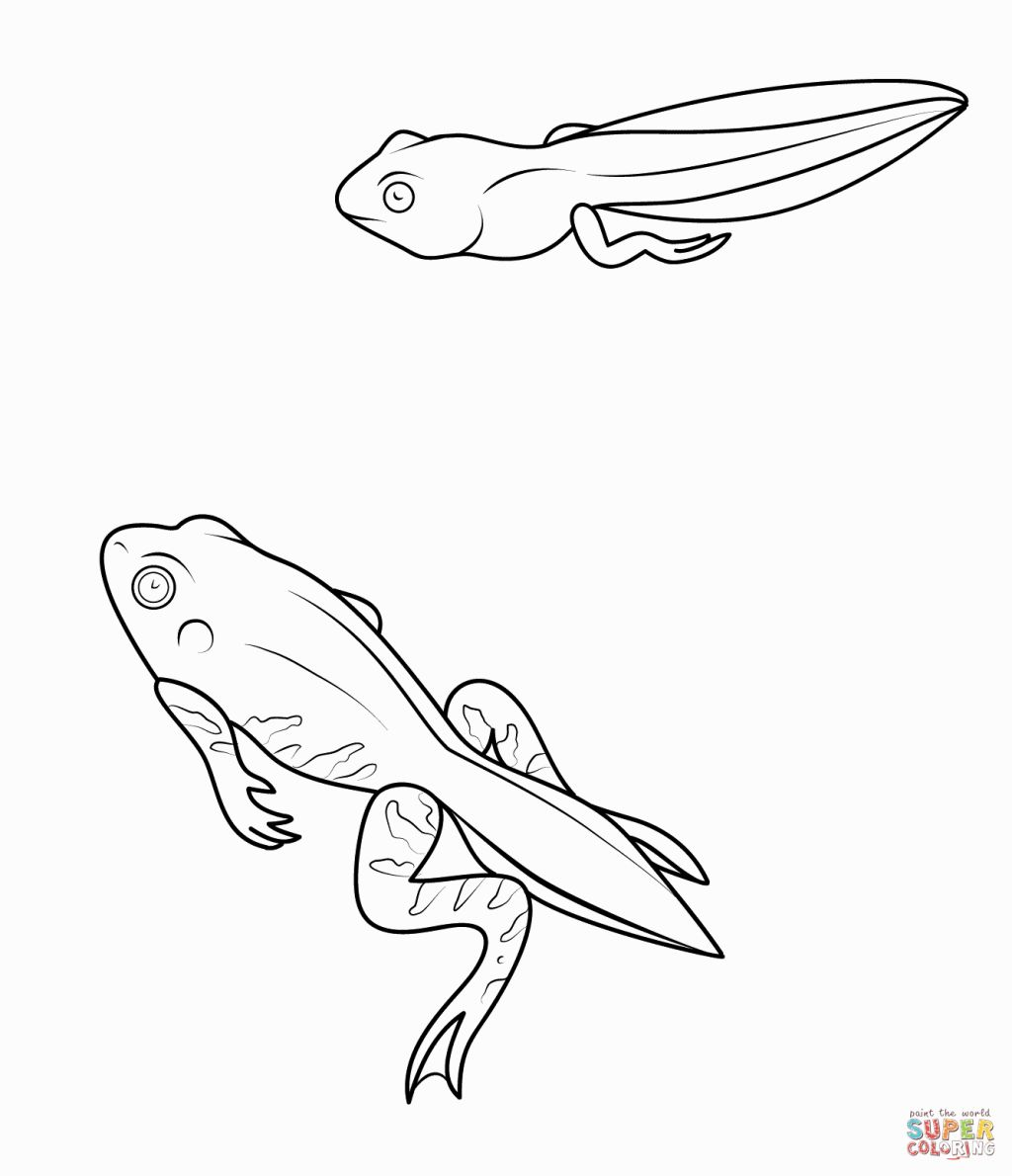 toad frog pollywog coloring pages - photo#2
