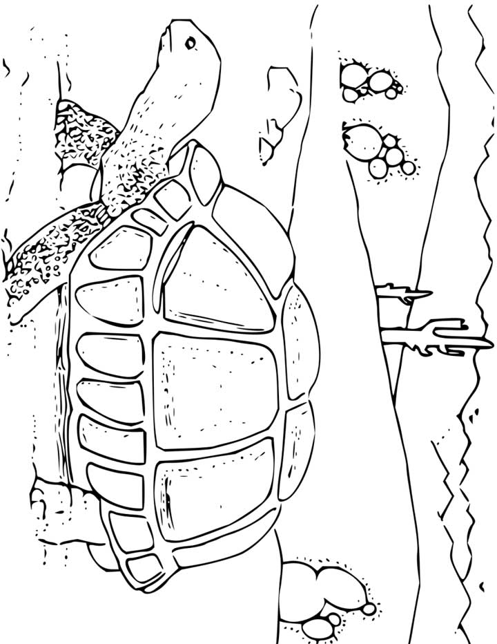 Tortoise Coloring Page for Kids - Free Printable Picture