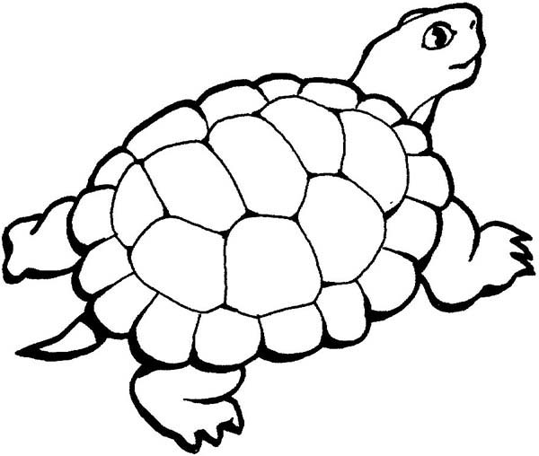 Beautiful Turtle Coloring Page Sun Free