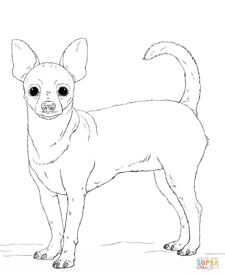 Chihuahua And Pug Coloring Pages - Сoloring Pages For All Ages