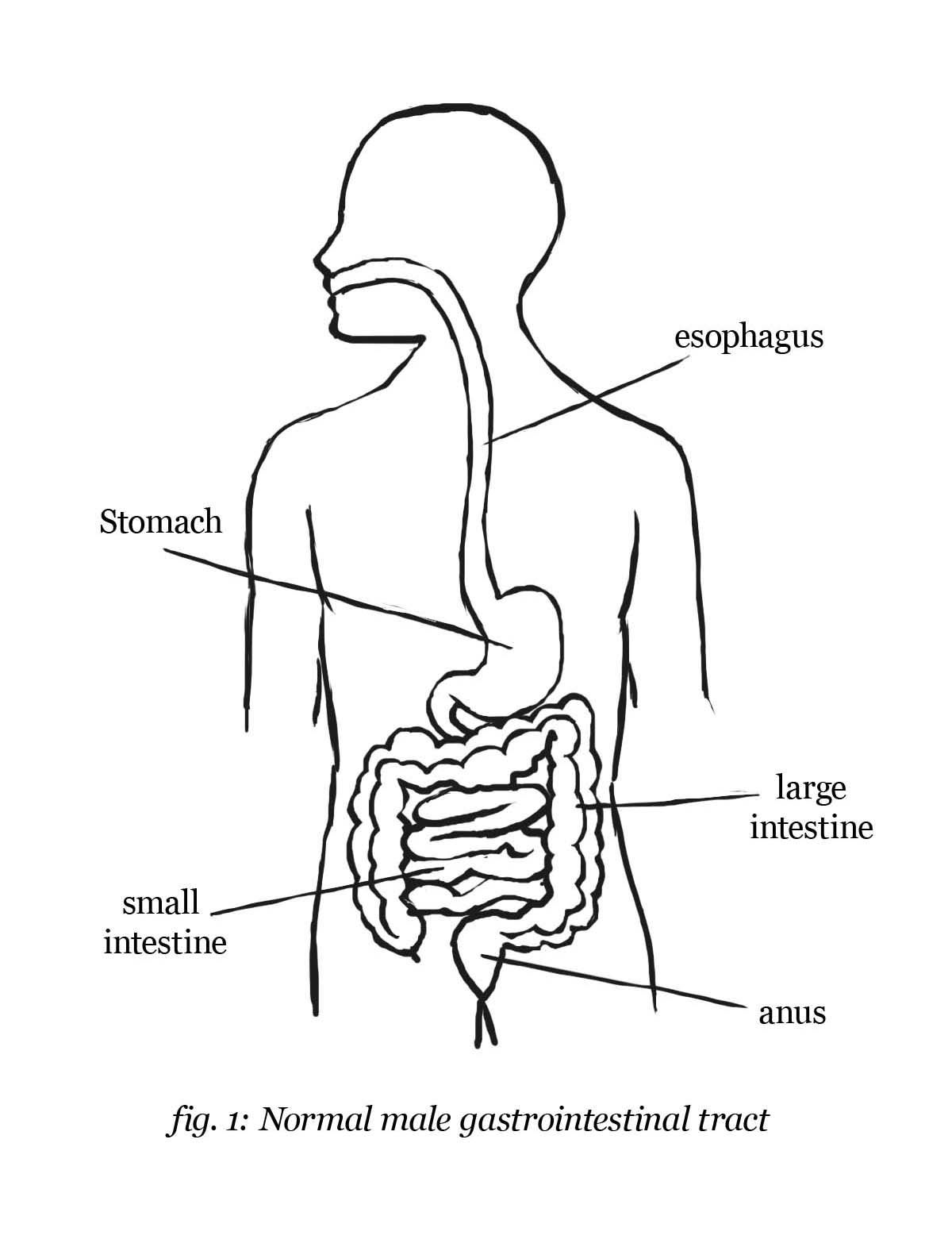 coloring pages digestive system - photo#8