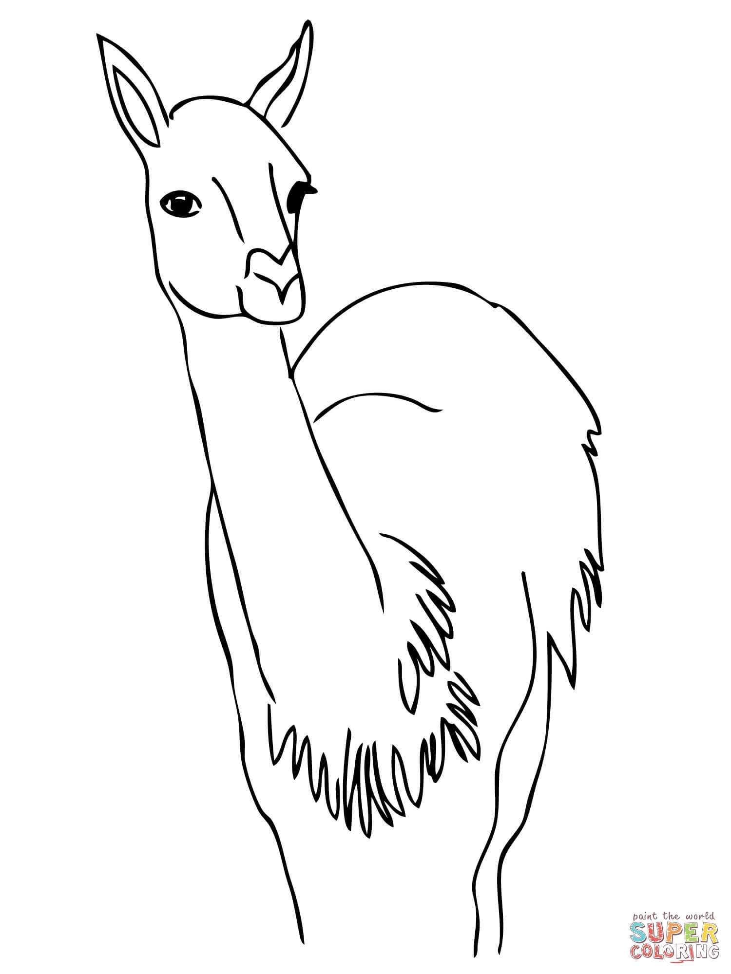 Guanaco from South America coloring page | Free Printable Coloring ...