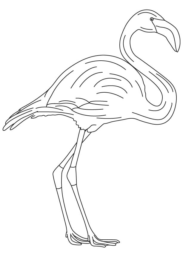 flamingo coloring pages printable free - photo#34