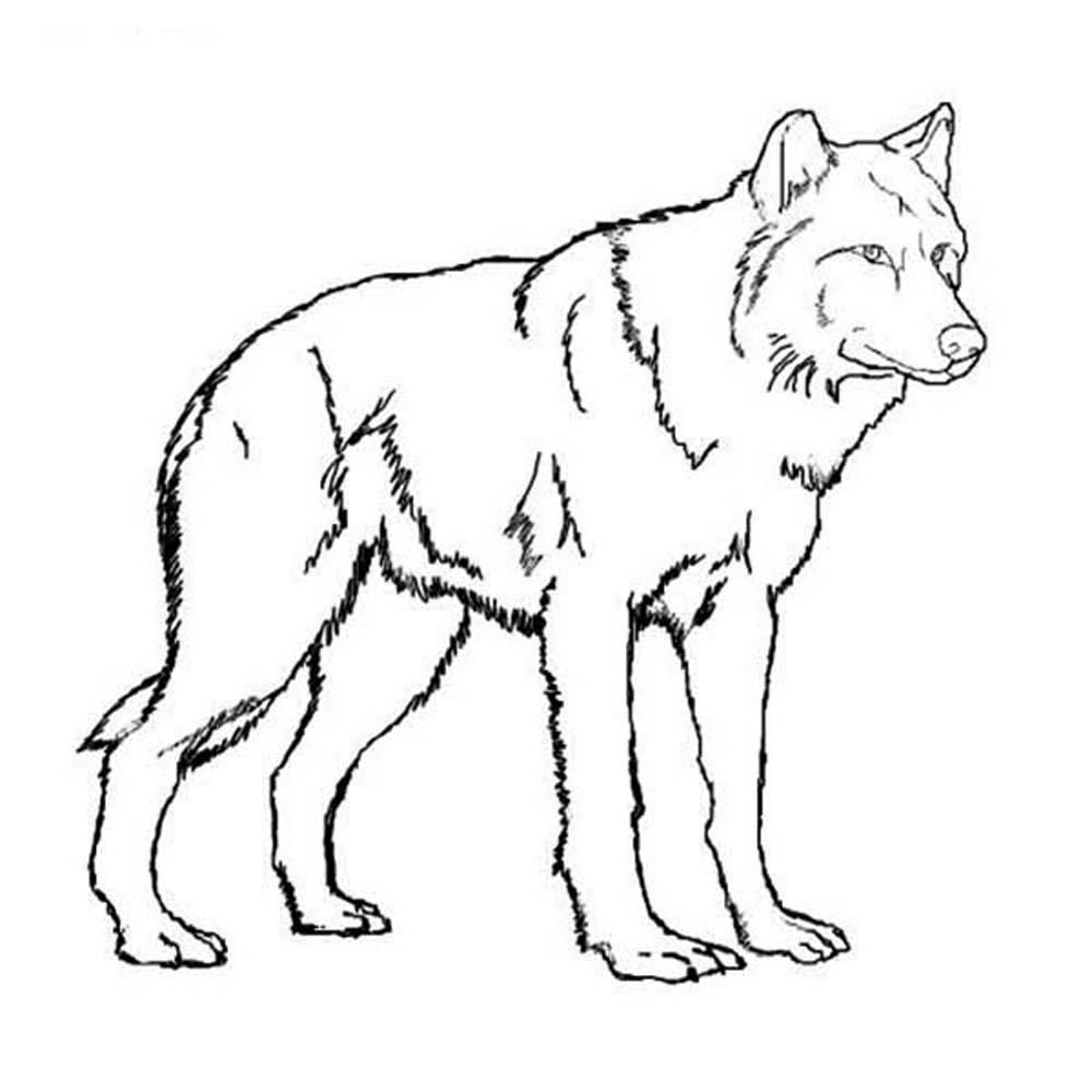 Print Wolf with baby wolfs coloring pages | Puppy coloring pages ... | 1000x1000