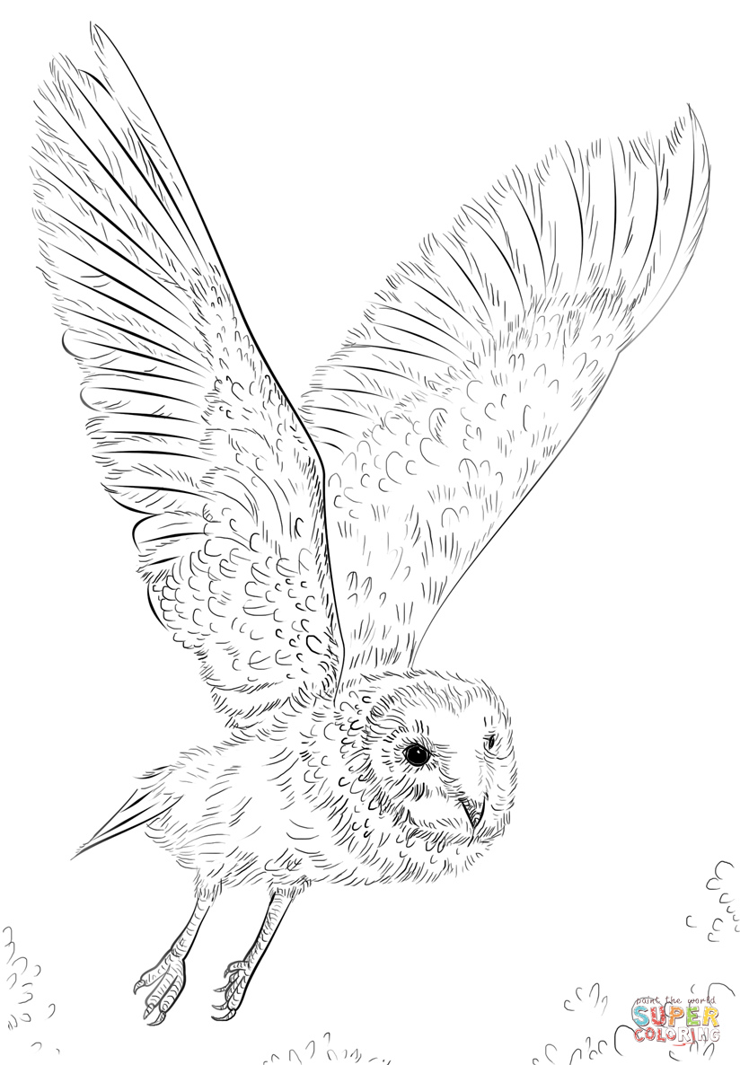 Flying Owl Coloring Pages Coloring Home
