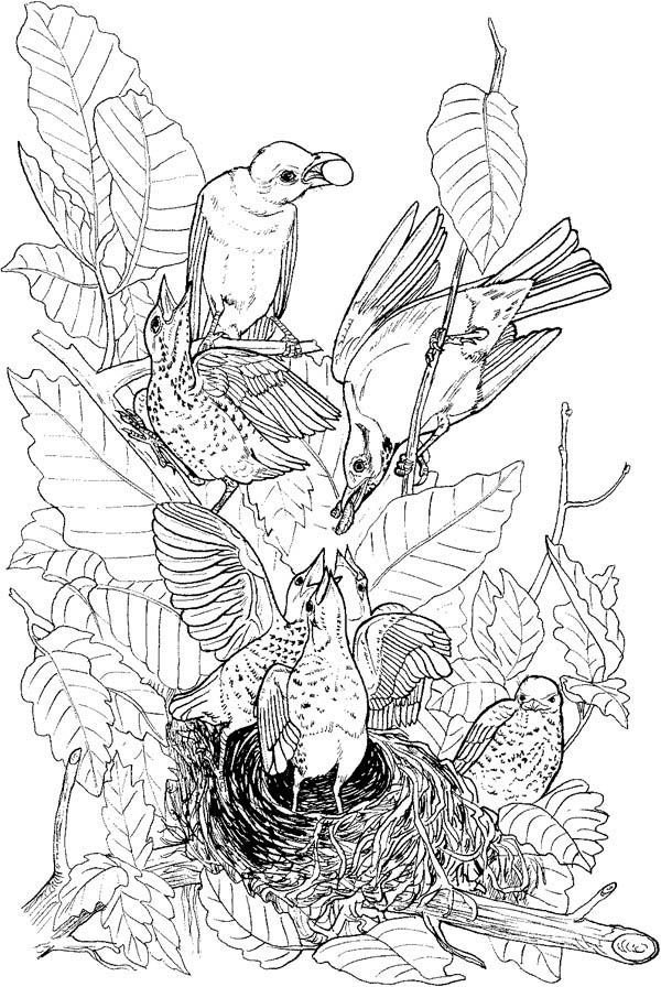 This is a picture of Terrible nest coloring pages