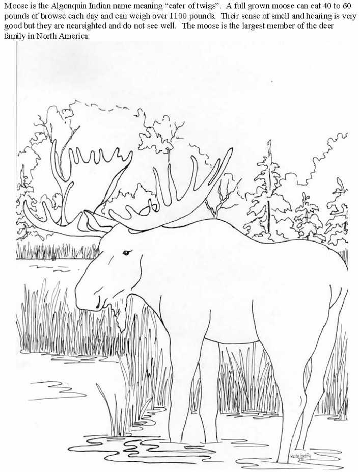 8 Pics Of National Geographic Coloring Pages Moose National