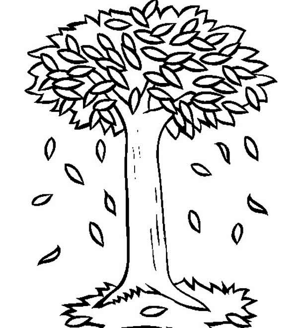 Fall Tree Coloring Pages Fall Best Free Coloring Pages Fall Tree Coloring Page