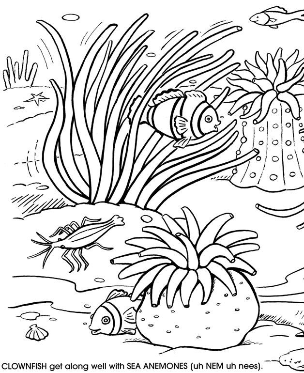 8 Pics Of Free Printable Coloring Pages Coral Reef