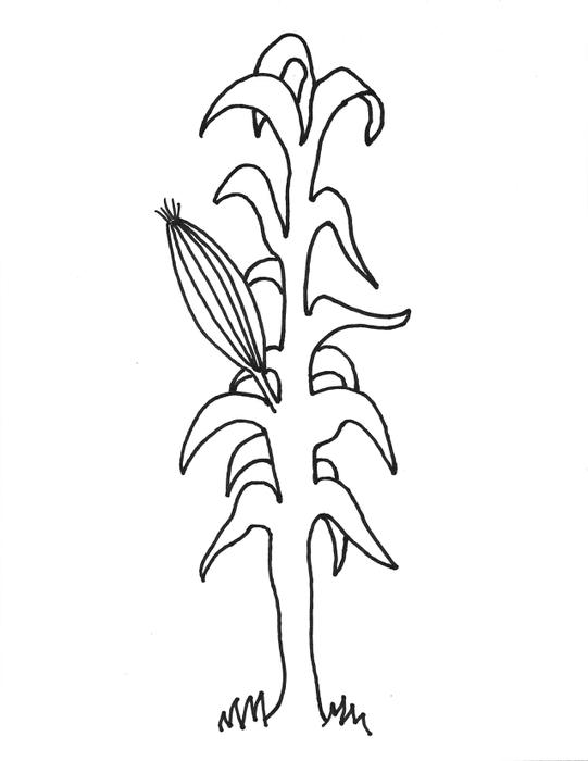 Corn Stalk Coloring Page