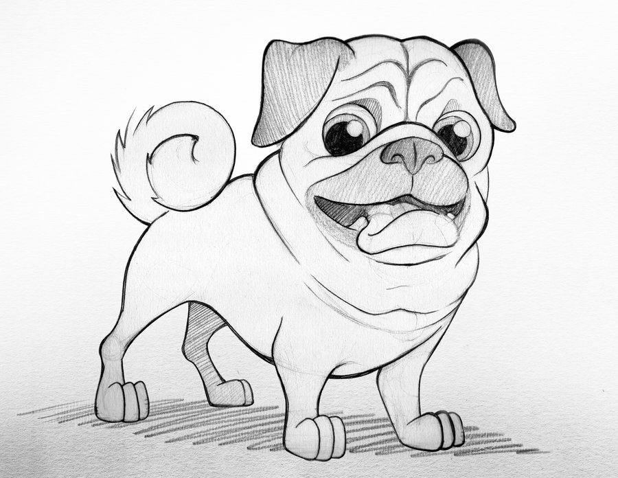 Pug Dog Sketch Coloring Page