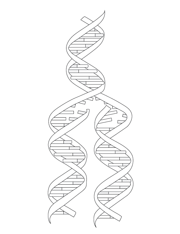 genetics coloring pages - photo#4
