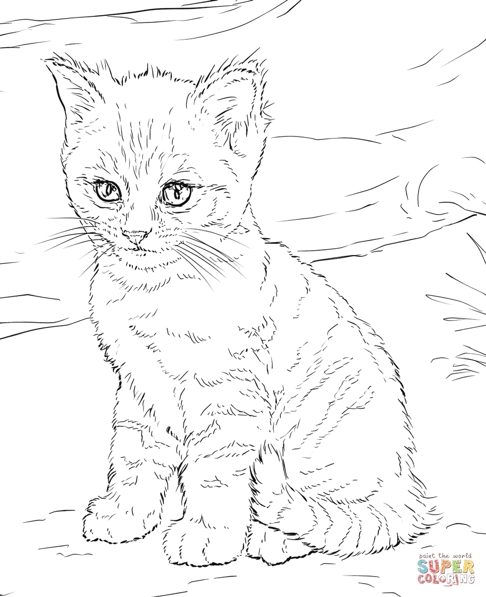 Cats coloring pages | Free Coloring Pages
