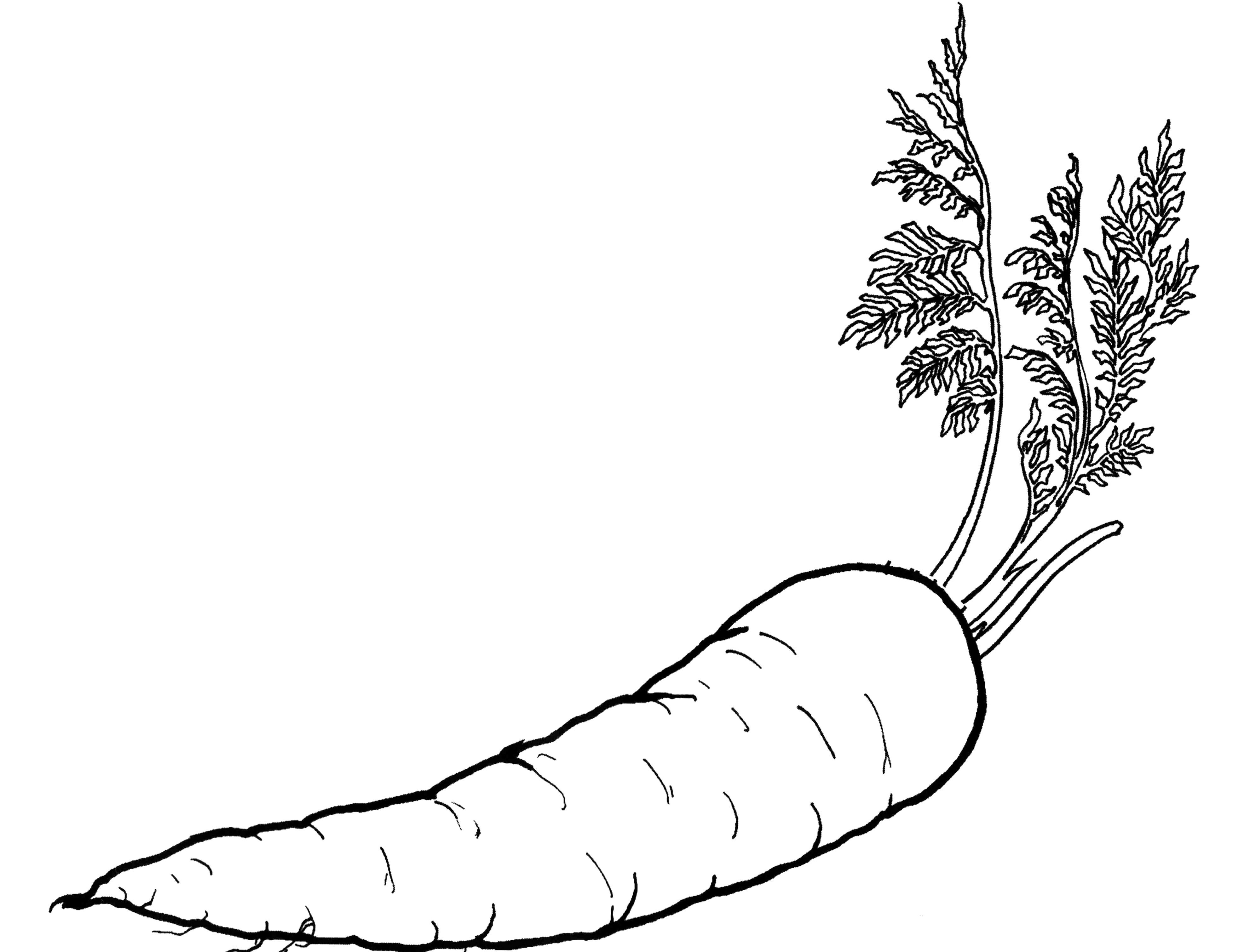 Chinese Vegetable Coloring Page - Coloring Pages For All Ages