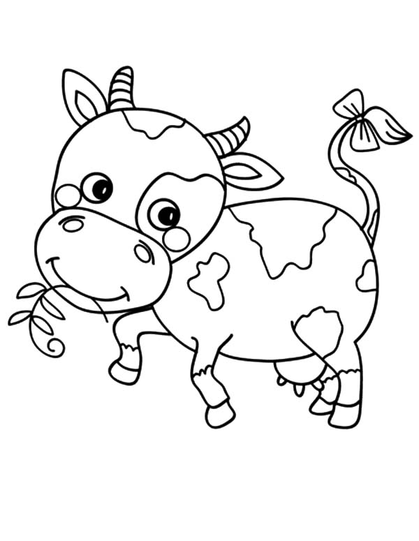 Coloring pages of a cow coloring home for Coloring pages of a cow