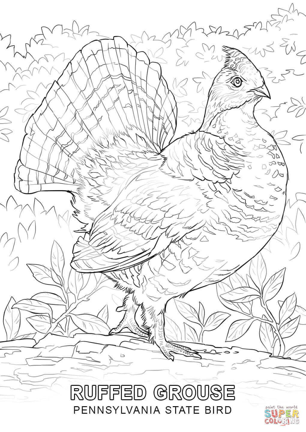 Wisconsinstate Bird Coloring Page Coloring Home