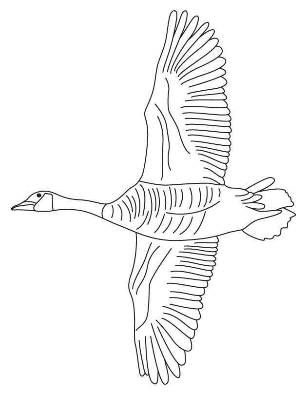 geese flying south coloring pages - photo#6