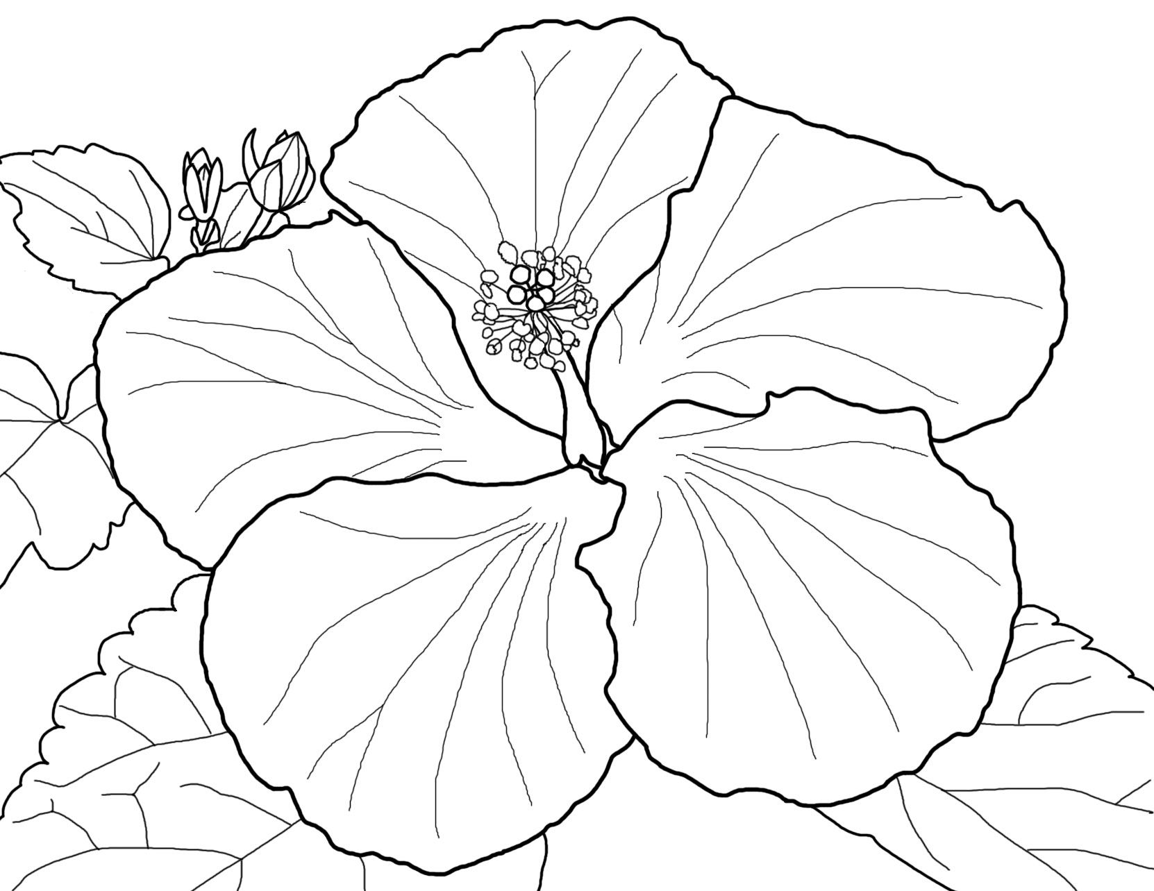 Free Hibiscus Flower Coloring Pages
