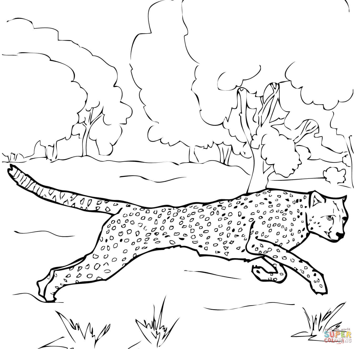 Baby Cheetah For Coloring Pages - Coloring Home