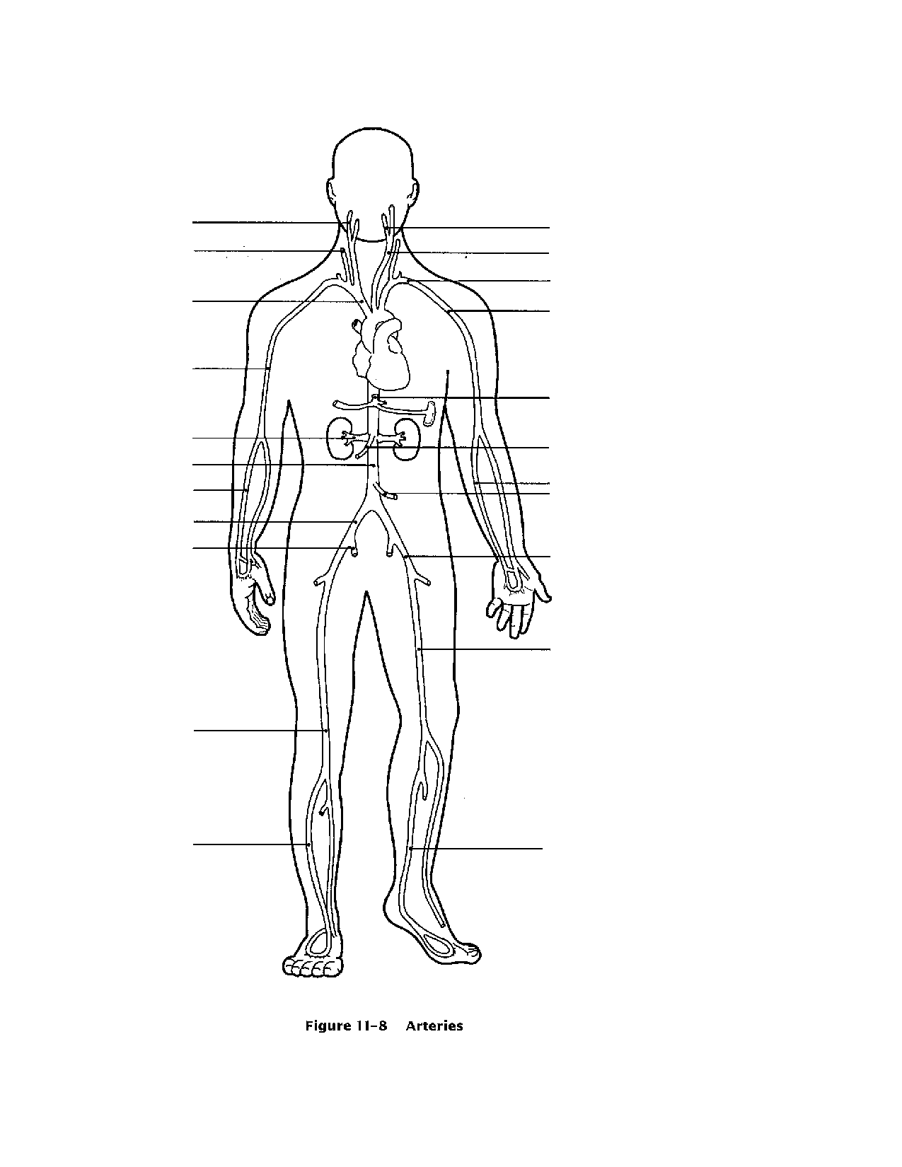 worksheet Circulatory System Worksheets Kids circulatory system for kids coloring pages az and adults
