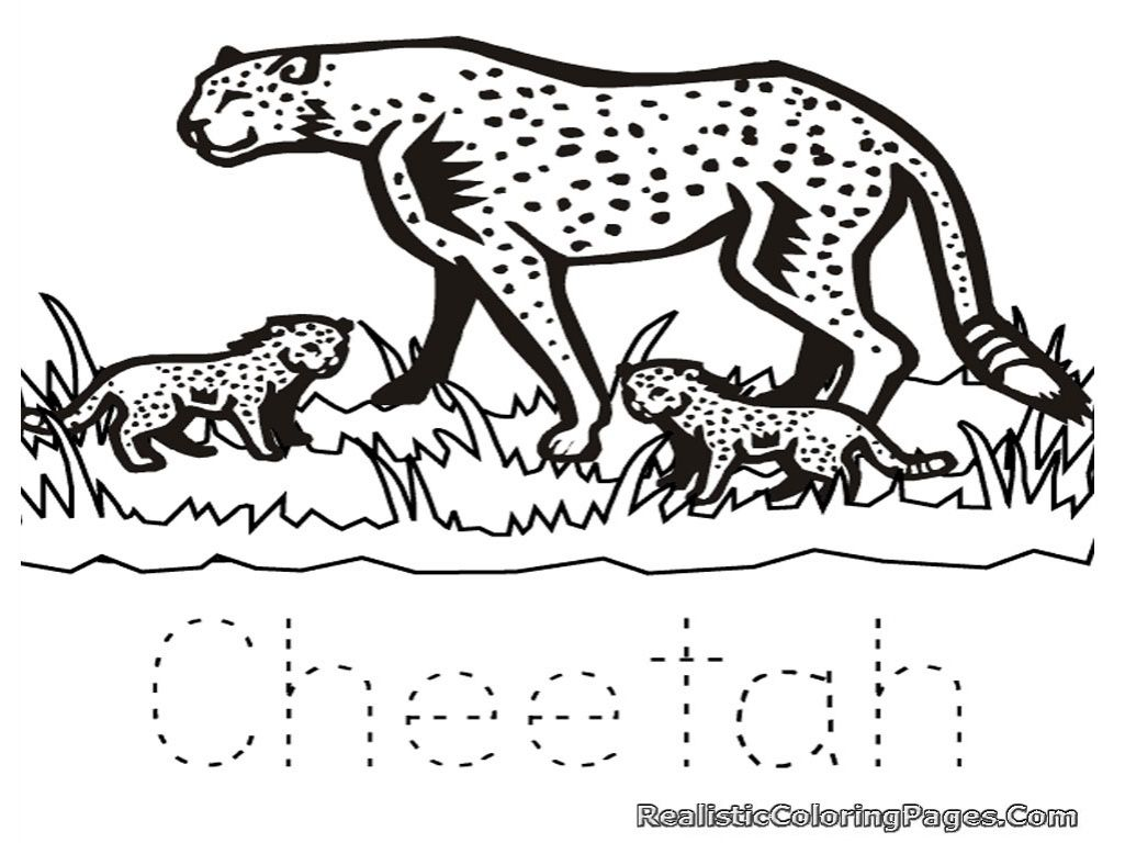 Cute Baby Cheetah Coloring Pages Real Cheetah Coloring Pages Kids