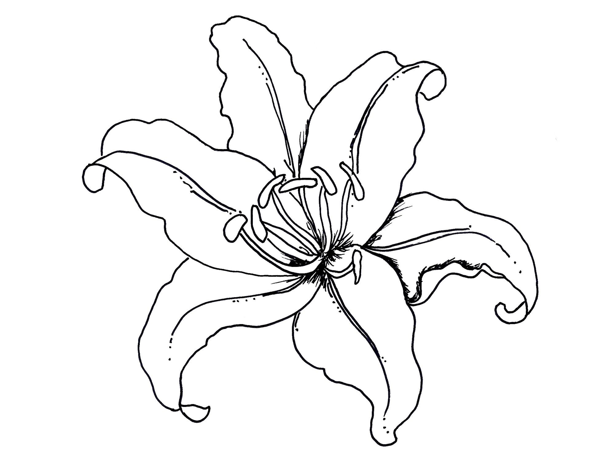 Hawaiian Flowers Coloring Page Coloring Home