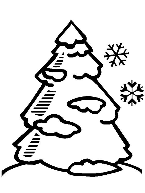 kids under pine trees coloring pages | A Pine Tree Covered With Snow On Winter Coloring Page ...