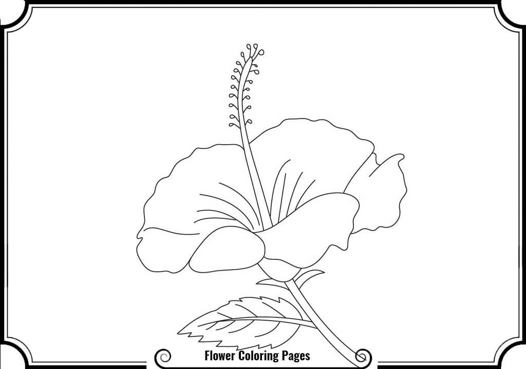 Coloring Pages Of Hibiscus Flowers - Coloring